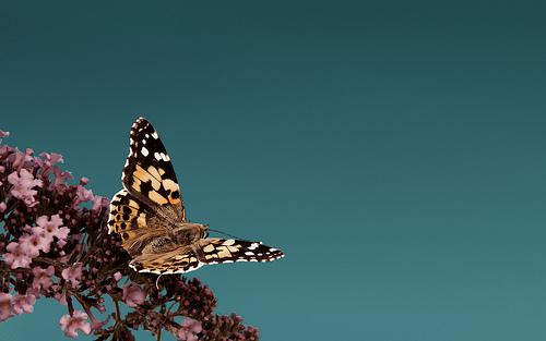 Pearls of Suffering, Wings of Grace